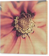 Flower Beauty II Wood Print by Marco Oliveira
