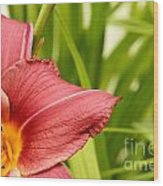 Flower Lily Background Wood Print