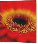 Flower Macro 1 Wood Print