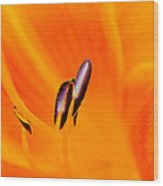 Flower Macro Wood Print