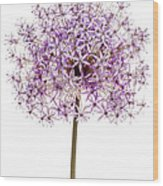 Flowering Onion Wood Print