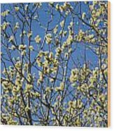 Fluffy Catkins At At Tree Against Blue Sky Wood Print