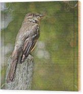 Flycatcher In Southern Missouri Wood Print