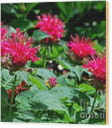Flying Bee With Bee Balm Flowers Wood Print