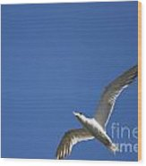 Flying Crested Tern Wood Print