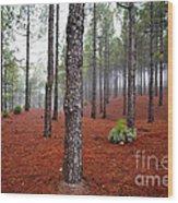 Foggy Landscape Wood Print