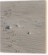 Footprints Wood Print