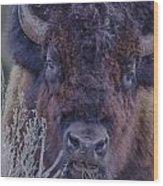 Forest Bull Wood Print