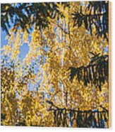 Forest Tale - Featured 3 Wood Print