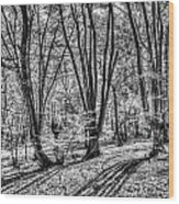 Forest View Wood Print
