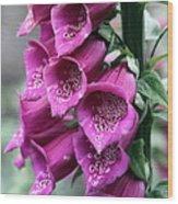 Foxglove Digitalis Spcial Wood Print