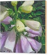 Foxglove In Sunlight-2 Wood Print