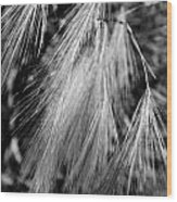 Foxtail Blowing In The Wind Wood Print