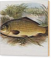 Fresh Water Fish Wood Print