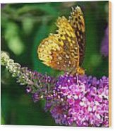 Fritillary Butterfly  Wood Print