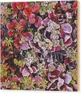 Frost On Autumn Tundra Wood Print