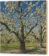Fruit Orchard Wood Print