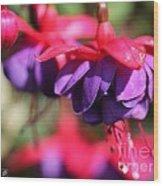 Fuchsia Named Dark Eyes Wood Print