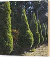 Funeral Cypress Trees Wood Print