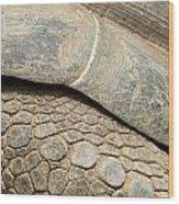 Galapagos Turtle Wood Print