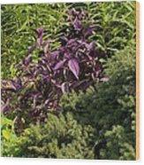 Garden Color At Woodward Park 8f Wood Print