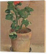 Geraniums In A Pot Wood Print
