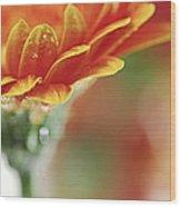 Gerbera Flower Wood Print