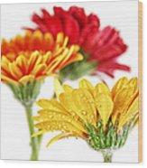 Gerbera Flowers Wood Print