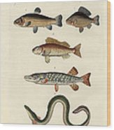 German Sea Fish Wood Print