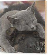 German Shepherd And Chartreux Kitten Wood Print