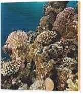 Giant Clam And Tropical Reef In The Red Sea. Wood Print