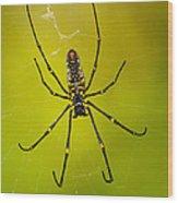 Giant Wood Orb Spider Wood Print
