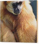 Gibbon Monkey  Wood Print