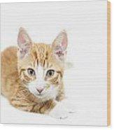 Ginger Kitten Staring Wood Print