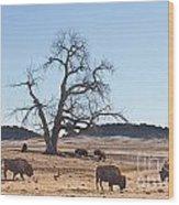 Give Me A Home Where The Buffalo Roam Wood Print