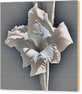 Gladiolus Named Nova Lux Wood Print
