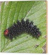 Glanville Fritillary Butterfly Caterpillar - Melitaea Cinxia Wood Print