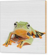 Gliding Frog Wood Print by Scott Linstead