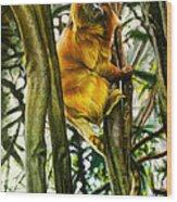 Gold Mane Wood Print