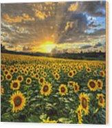 Golden Evening Wood Print by Debra and Dave Vanderlaan