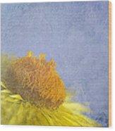 Golden Everlasting Daisy Wood Print