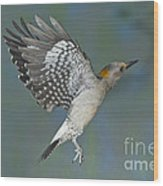 Golden-fronted Woodpecker Wood Print
