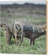 Golden Jackal Canis Aureus Wood Print