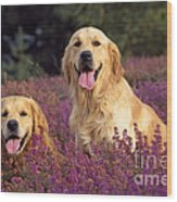 Golden Retriever Dogs In Heather Wood Print