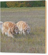 Golden Retriever Dogs On The Hunt Wood Print