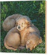 Golden Retriever Puppies Sleeping Wood Print by Linda Freshwaters Arndt