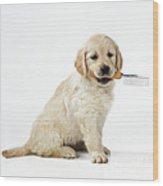Golden Retriever Puppy Wood Print