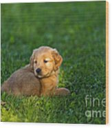 Golden Retriever Puppy Wood Print by Linda Freshwaters Arndt