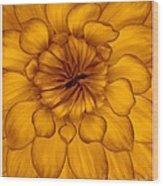 Golden Sunshine - Dahlia Wood Print