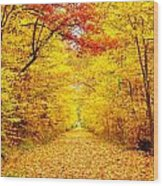 Golden Trail Wood Print by Andrea Dale